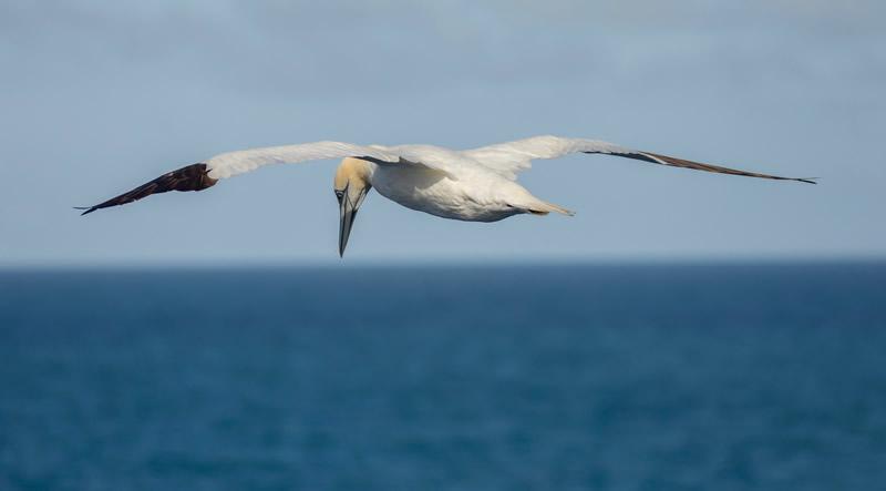 Jung in vogelvlucht